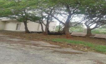 गोपालगंज (बिहार) के गांव सदियों से कर रहल बा पर्यावरण के रक्षा।